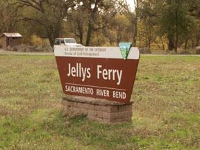 jellys.jpg